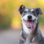 cuidados com cachorros