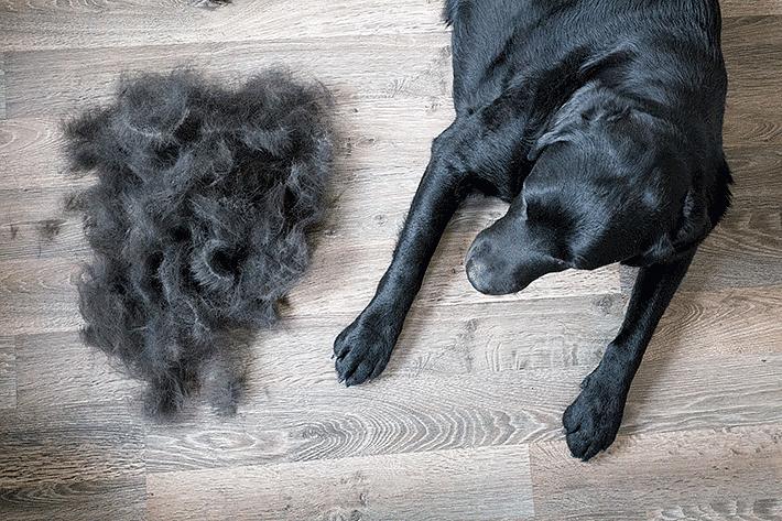 monte de pelo de cachorro