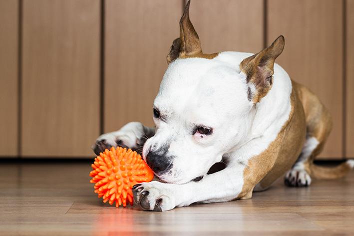 Brinquedos para cachorro para apartamento