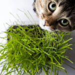 Gato com erva catnip