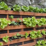 horta vertical com treliça de madeira