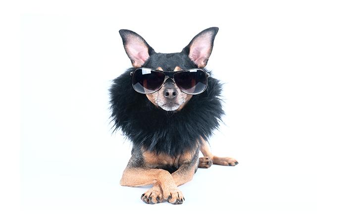 cachorro pequeno com acessórios