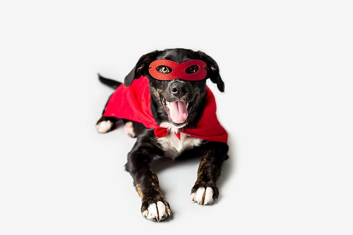 cachorro fantasiado de herói
