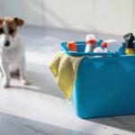 Cachorro com balde e produtos de limpeza