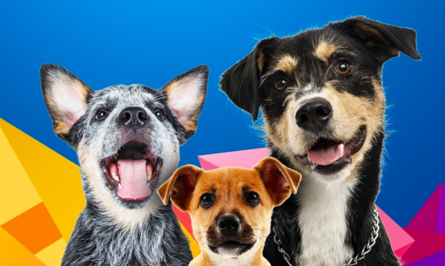 três cães juntos