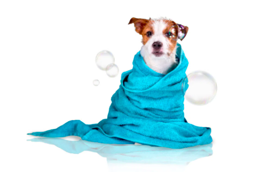 cachorro enrolado na toalha