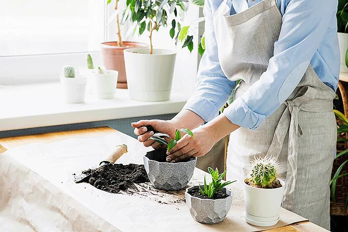 Pessoa colocando adubo nas plantas