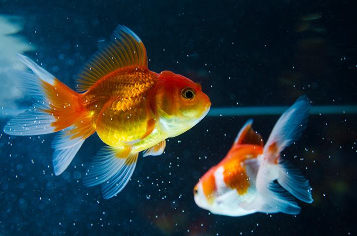 peixes no aquário no inverno