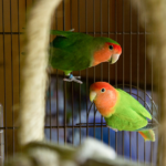 Duas aves no inverno