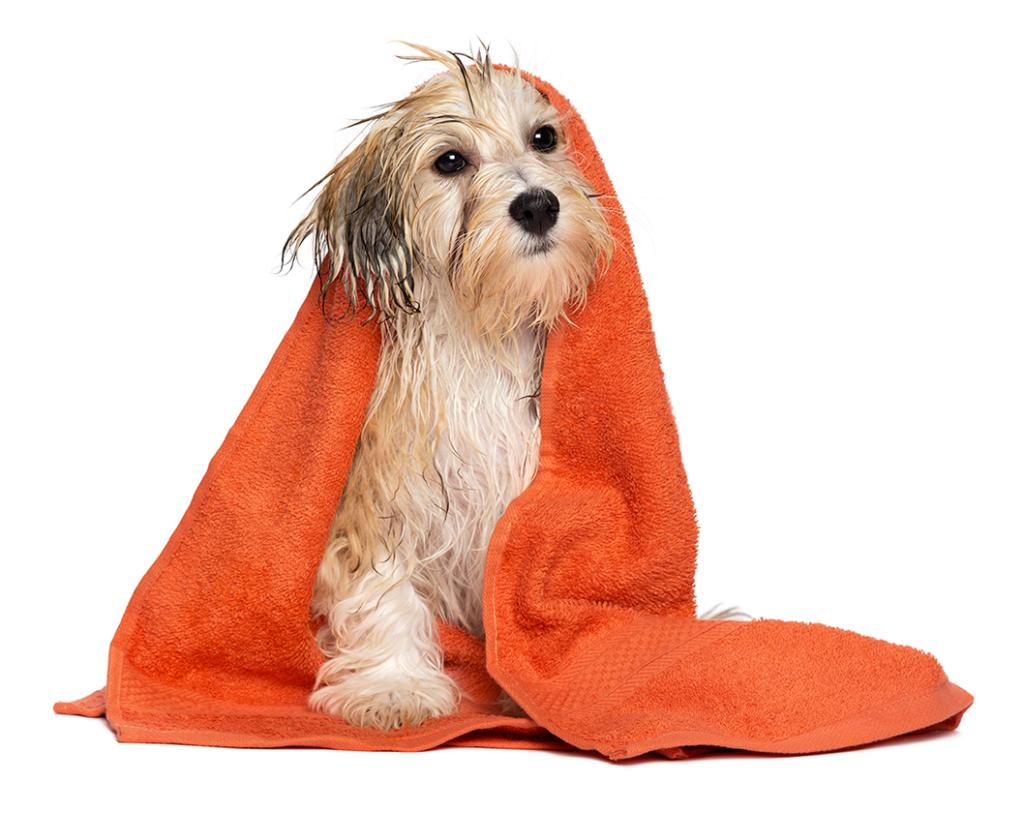 Cachorro filhote com toalha