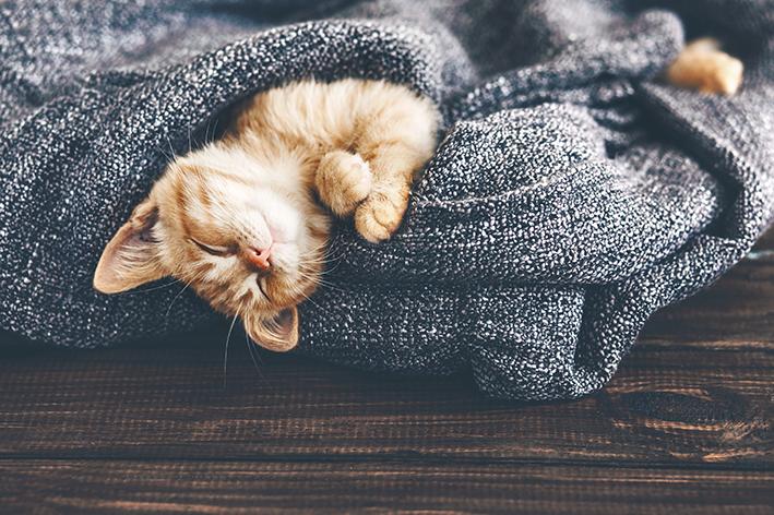 Gato sente grio
