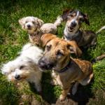 cachorros vira-latas juntos