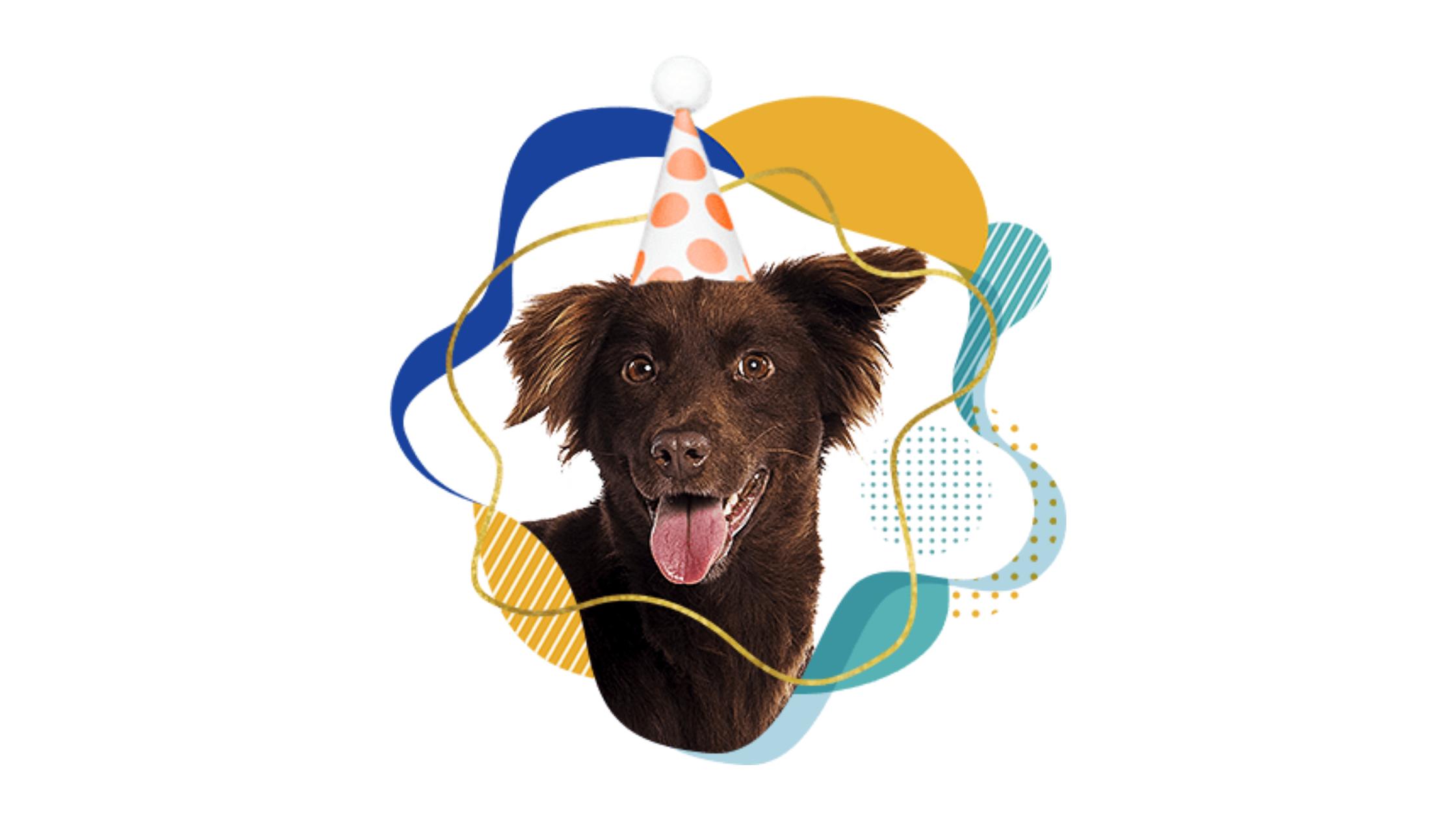 Cachorro no Aniversário Cobasi