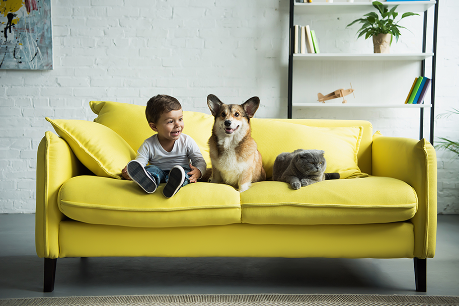 Criança e cachorro em sofá amarelo com lenço umidecido