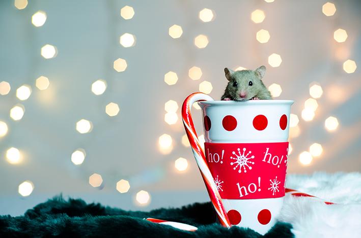 rato dentro de caneca natalina
