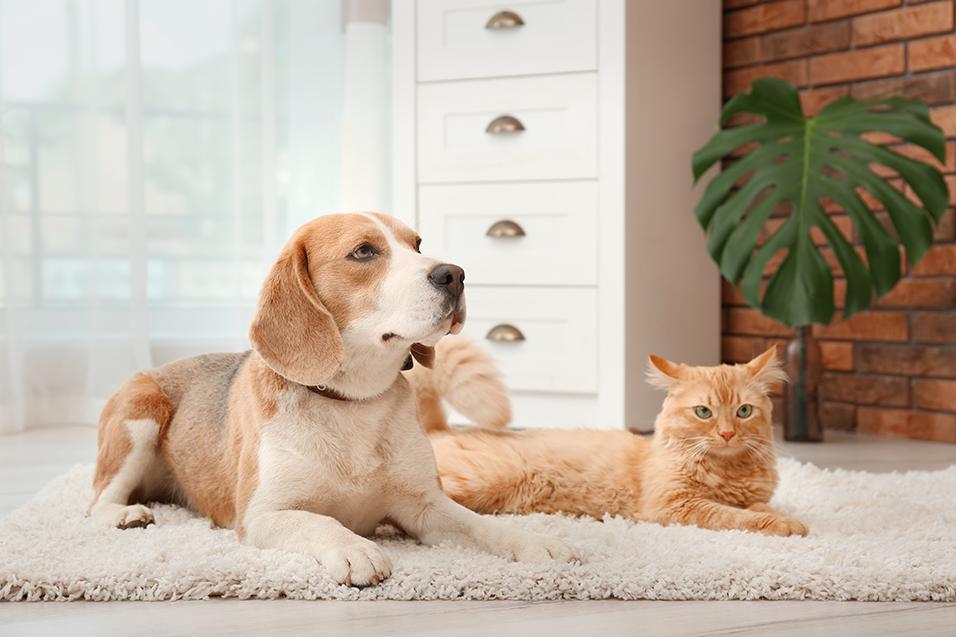 Cachorro e gato esperando para tomar bravecto