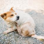 Butox para cachorro se coçando