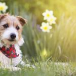 cachorro fofo na primavera