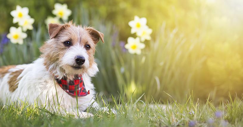 cachorro na primavera