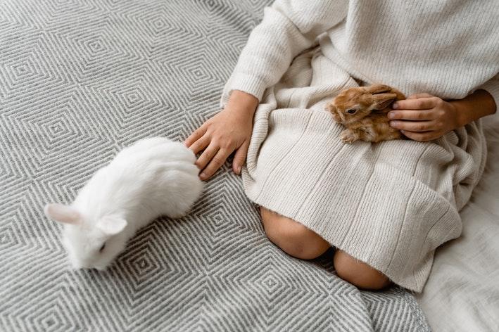 coelho no colo da dona