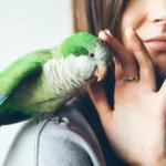 Papagaio recebendo carinho na cabeça