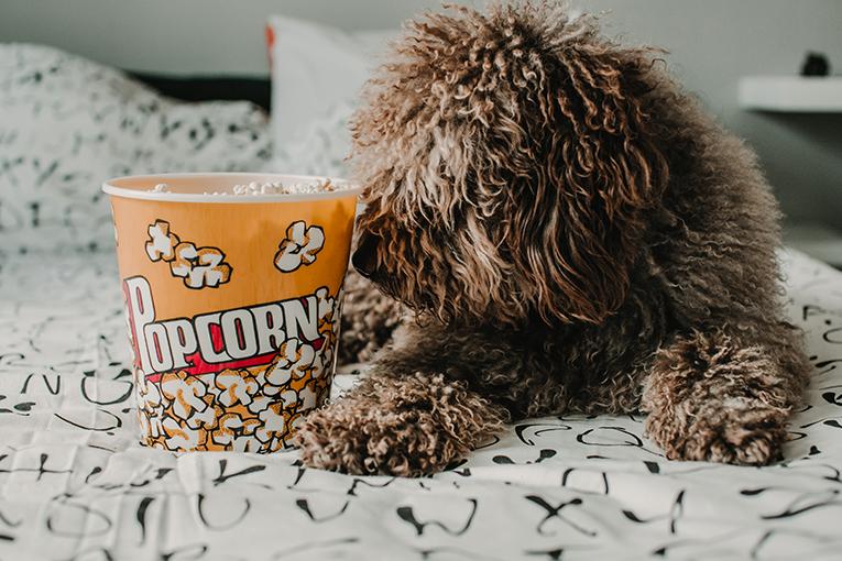Pet com balde de pipoca vendo desenho de cachorro
