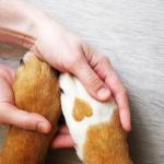 Pessoa segura pata de cachorro com coração