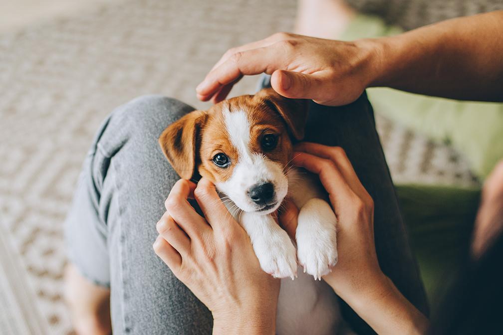 Filhotes de cachorro em casa no colo do dono