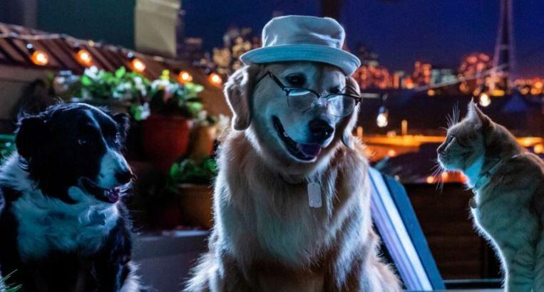 Cena do filme de cachorro como cães e gatos