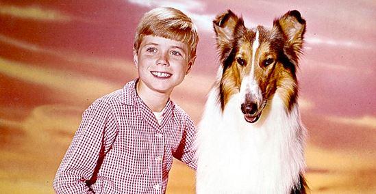 Cena do filme de cachorro lassie