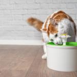 fonte-para-gatos-1