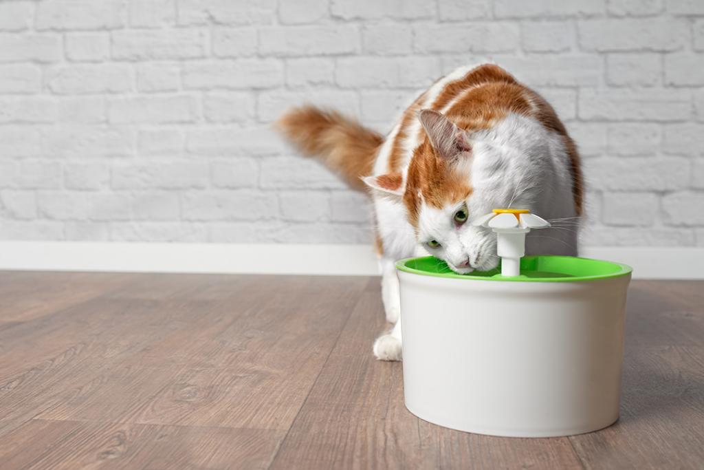 gato bebendo água em fontes