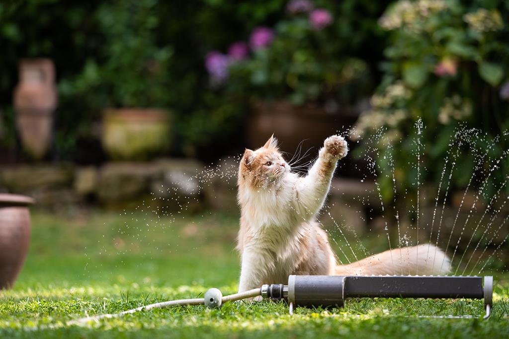 gato brincando com agua