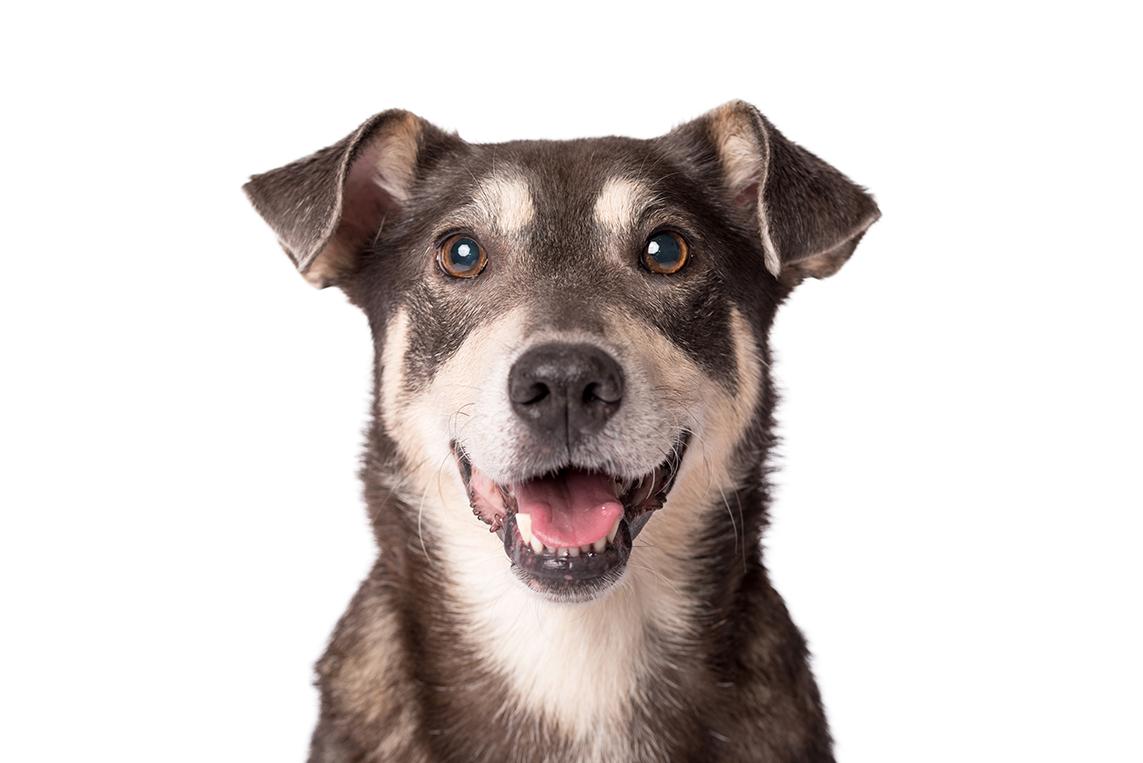 Cachorro esperando para tomar glicopan pet