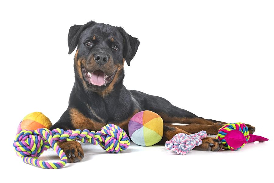 Cachorro Rottweilwer com produtos Jambo