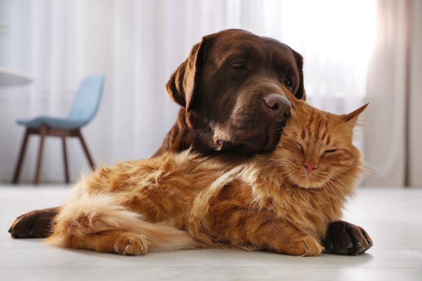 cachorro e gato abraçados