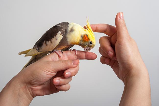 Pássaros recebendo carinho na cabeça