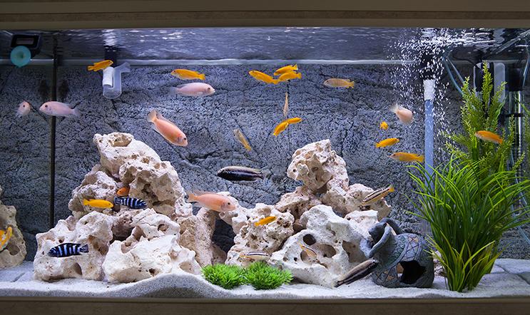 Peixes de aquário nadando