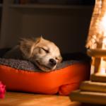 sonhar com cachorro dormindo
