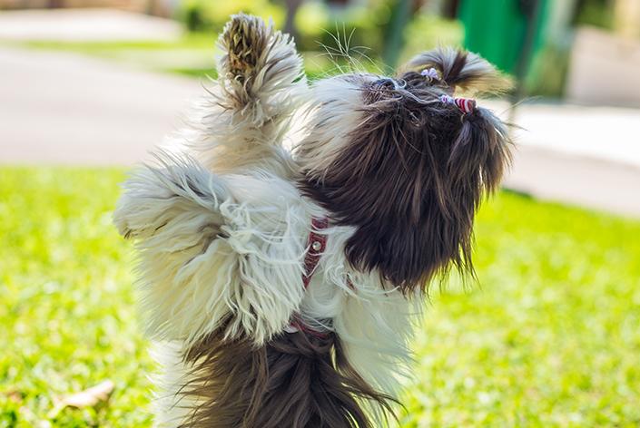 treinar cachorro em casa
