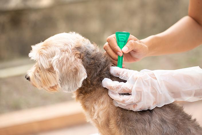 antipulgas em cachorro
