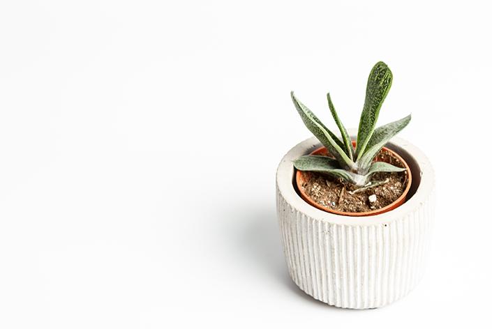 cachepot branco com planta