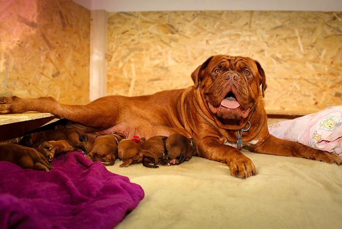 cachorra com filhotes