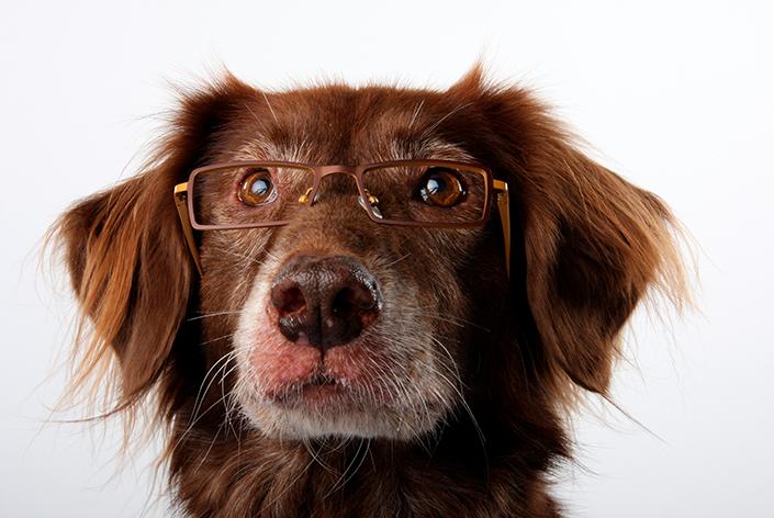 Cachorro sênior com óculos