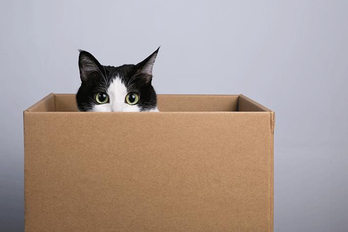 brinquedo para gato com caixa de papelão