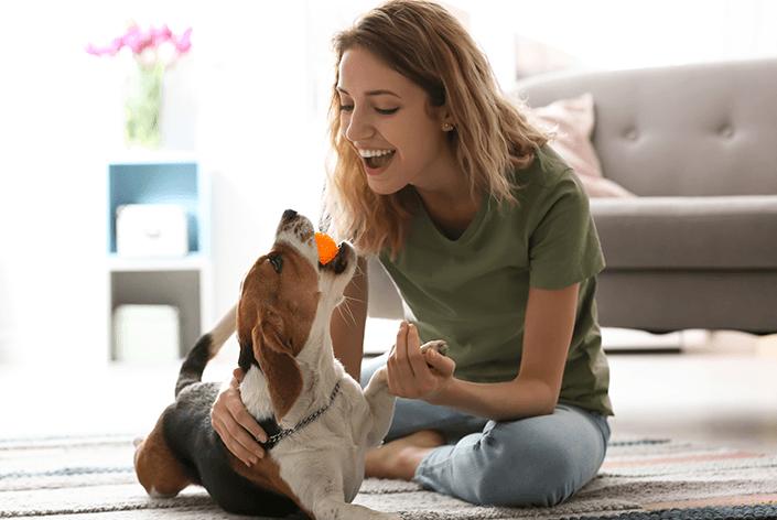 Mulher brincando com um beagle filhote