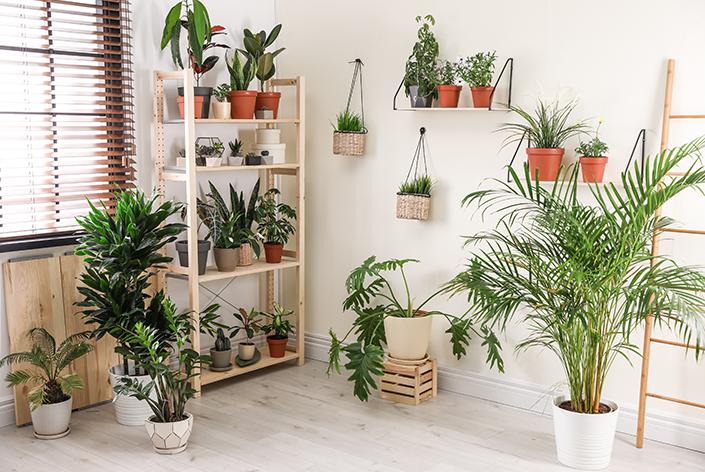 decoração com vasos de plantas