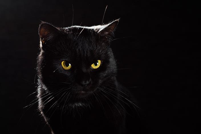 Gato preto de olhos amarelos em um fundo preto