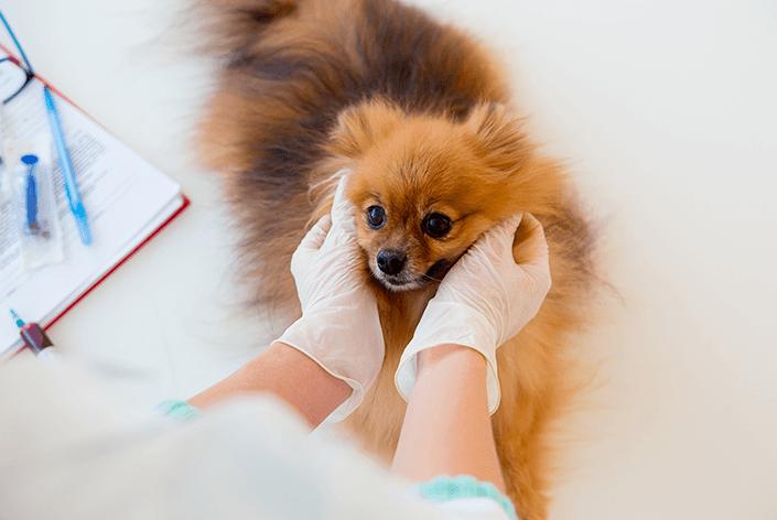 Cachorro na clínica veterinária