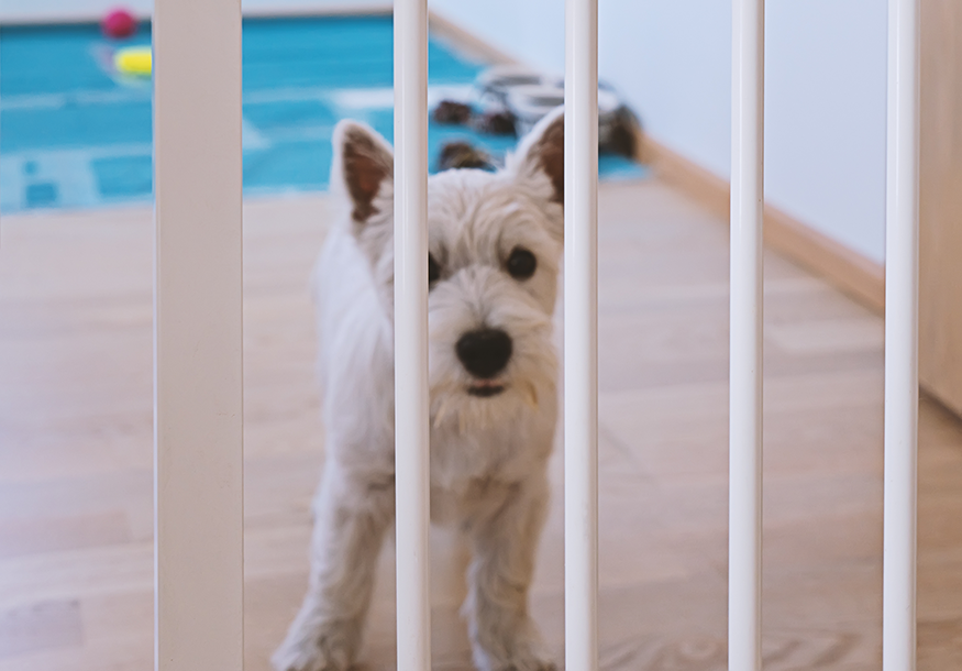 filhote atrás do portão para cachorro
